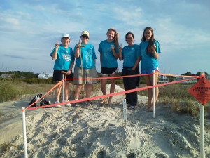 Every morning, volunteers walk our beaches, working to increase their chance at survival by checking nests and keeping an eye out for turtle tracks, laid nests, turtles, and predators that they may come across.