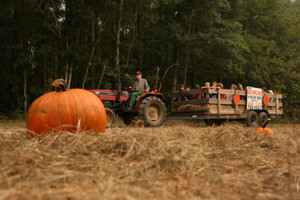 Holiday Farms - pumpkin patch- already gathered from the field, tractor-pulled hay rides, gift shop.