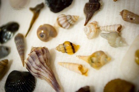 Fall is perfect for shelling along Beaufort's beaches