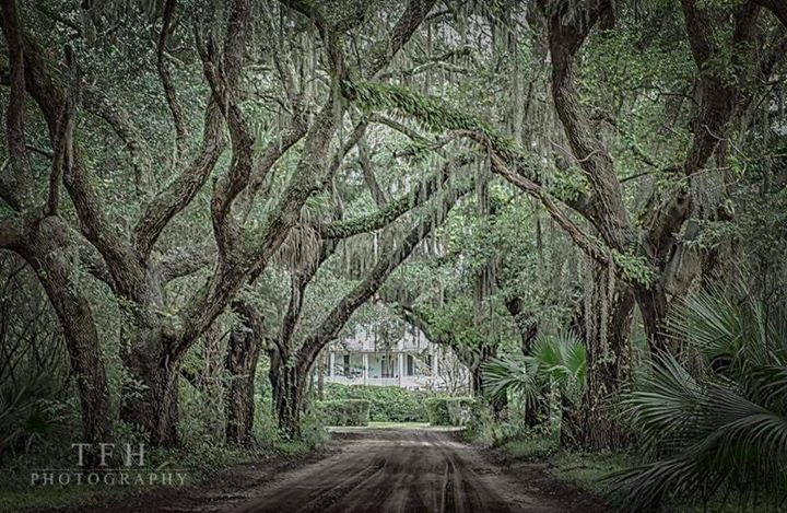 Avenue of Oaks, photo courtesy Tommy Henriquez