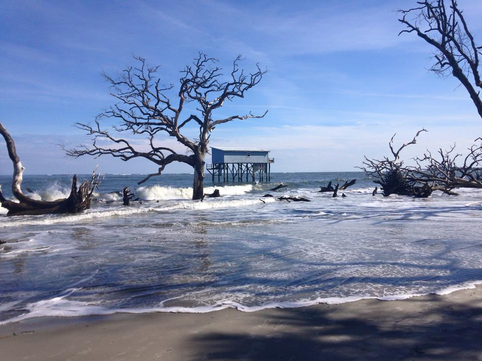 'Little Blue', the last cabin standing at Hunting Island will be coming down by the end of this year.  Photo by Amy Kerby