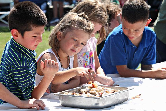 THe kids Shrimp Peeling Competition is always a hit at the Beaufort Shrimp Festival.  Photo ESPB