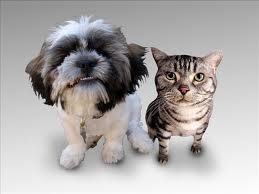Protect your pets against rabies and make sure their vaccinations are up to date.