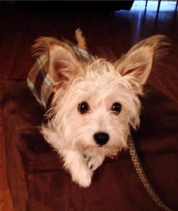 Meet Milton, Pet Friendly Beaufort's Pet of the Month for November 2013