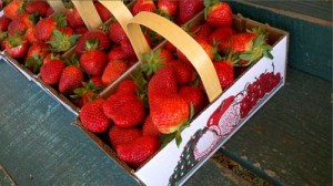 Local strawberries at Dempsey Farms, St. Helena SC