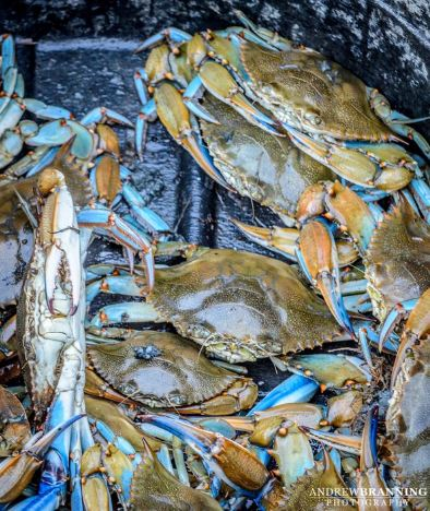 Could there by any more highly anticipated treat in the South than soft shell crabs?