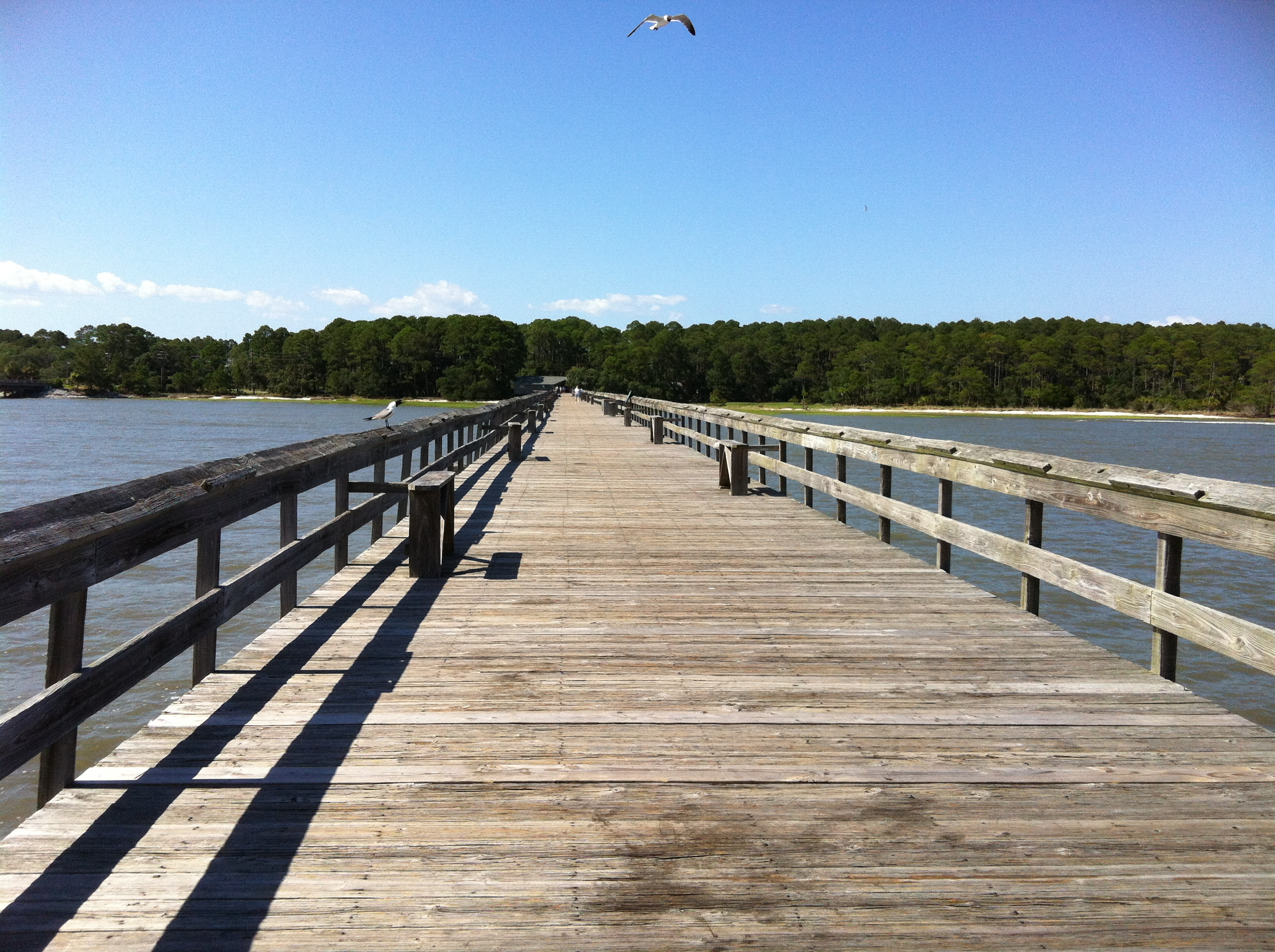 Crabbing off the dock lowcountry life for Island beach state park fishing