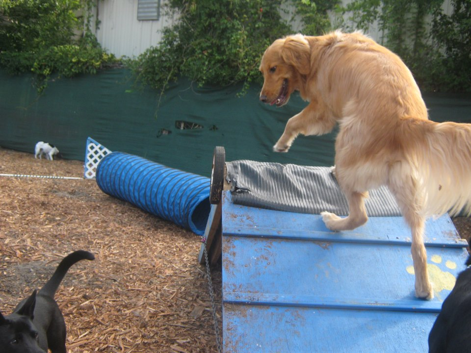 Why practice agility? It could save your dog's life