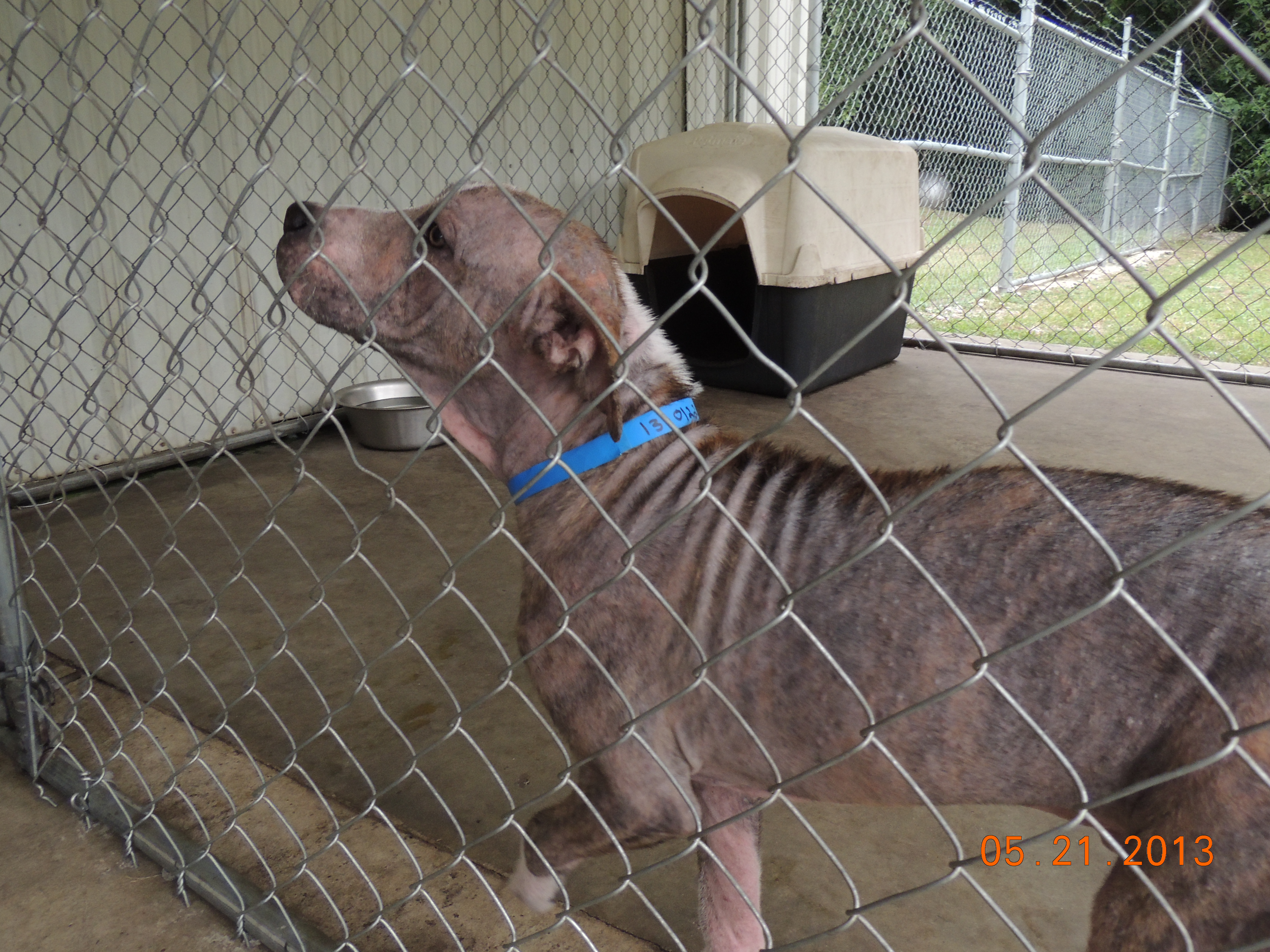 Dog For Adoption In Beaufort