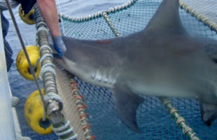 new species of shark discovered off of south carolina coast