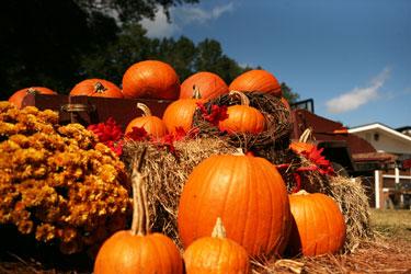 Beaufort area Pumpkin Patches