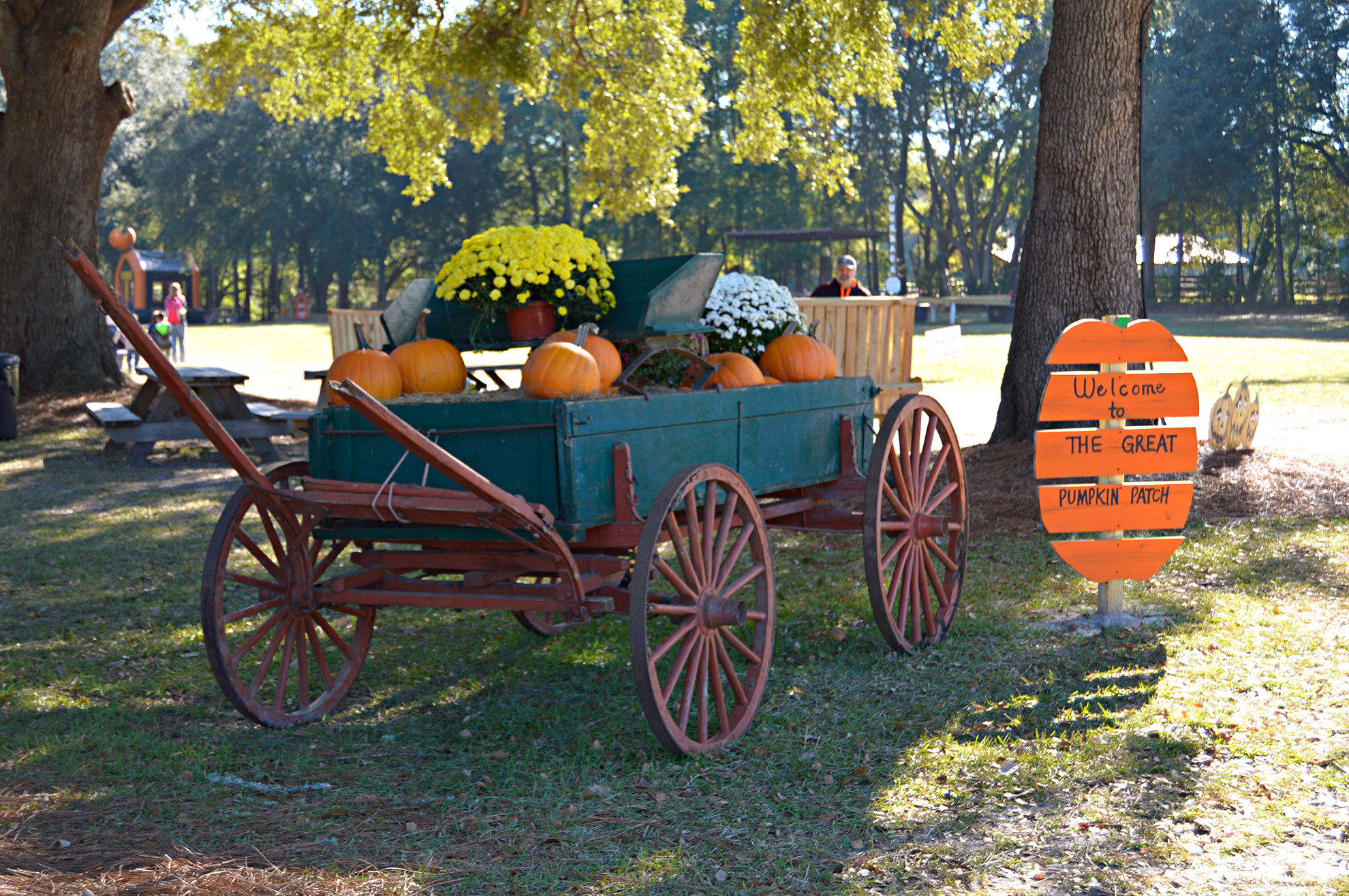 Beaufort area Pumpkin Patches