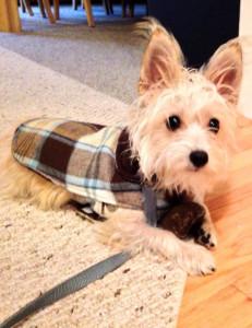 Meet Milton: Pet Friendly Beaufort's Pet of the Month for November 2013