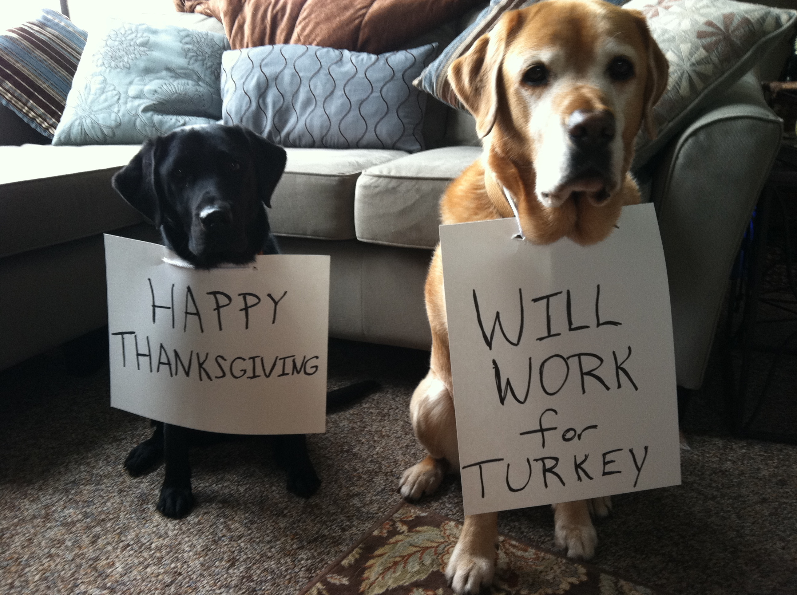 Don't Stuff Your Little Turkeys: Thanksgiving no-nos for pets