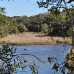 Along the Spanish Moss Trail