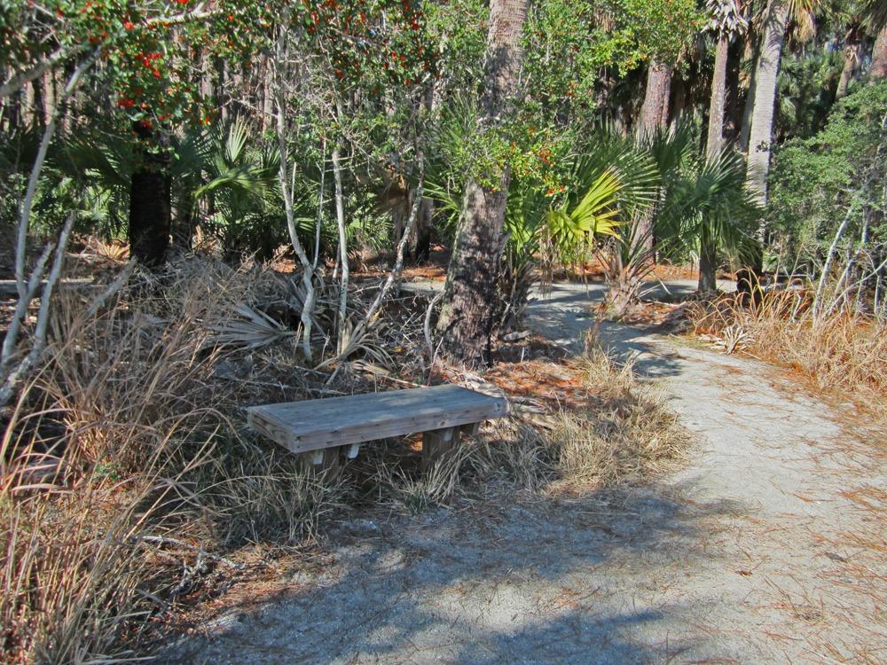 Hunting Island's Trails   Photo courtesy Robert Angel/Carolina Considered