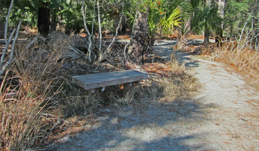 Running the scenic Hunting Island trails
