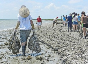 Local oyster reef building projects planned in April