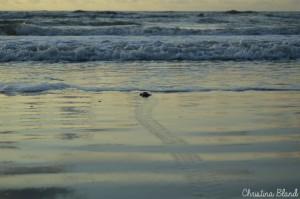 A weekend walk with the Fripp Island Turtle Patrol Photo by Christina Bland/ESPB