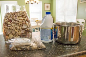 Preserving your vacation treasures: cleaning and caring for your seashells