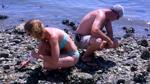 Hunting for sharks teeth at The Sands in Port Royal