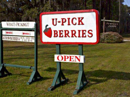 Dempsey Farms U-Pick