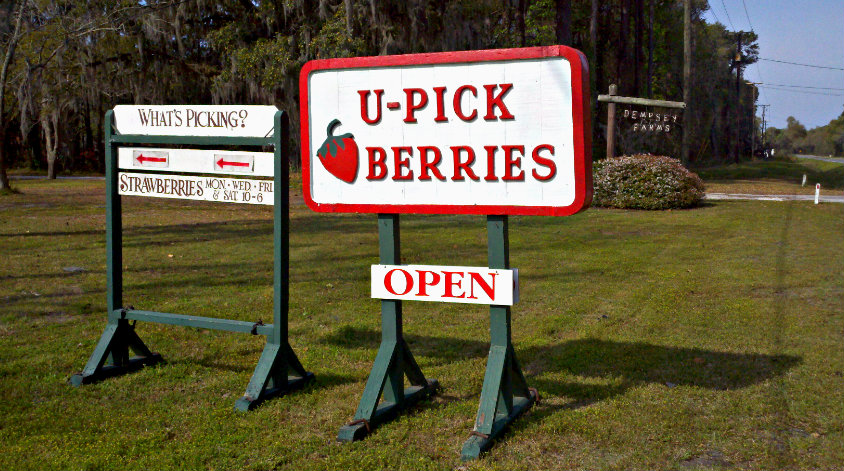 It's strawberry time in Beaufort