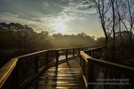 See gators, turtles, birds and lots more at Port Royal's Cypress Wetlands area. Photo by Arastasia Rolain