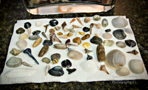 caring for your seashells
