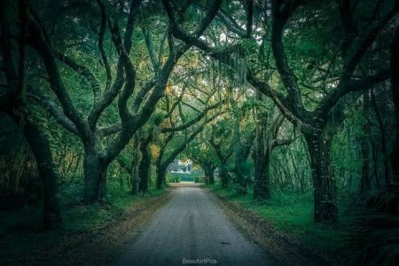 Coffin Point 'avenue of oaks on St. Helena Island Photo courtesy Phil Heim