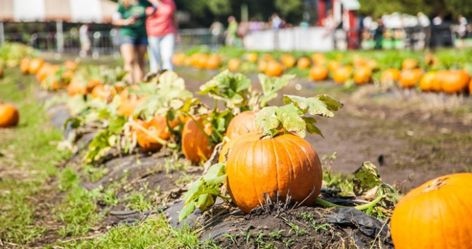 Beaufort area pumpkin patches...and more