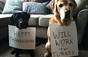 Pet Friendly Beaufort Thanksgiving no-nos for pets