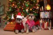 Keep your pet away from Christmastime hazards