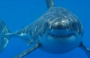 Shark attacks hit record high in 2015