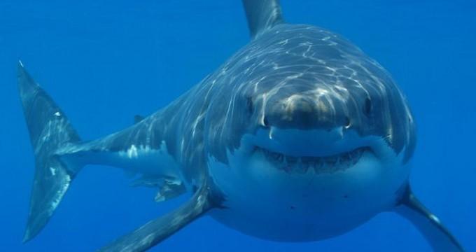 Shark attacks hit record high in 2015