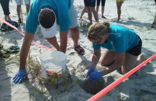 First sea turtle nest of the season found on Fripp Island