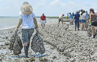Build an oyster reef and help Beaufort's waterways