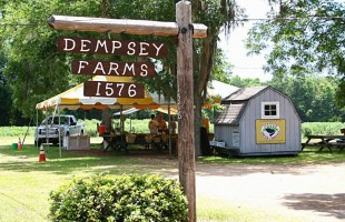 Lowcountry Food: Variety in season at Dempsey Farms