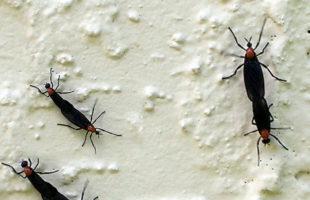 lovebugsinvade111
