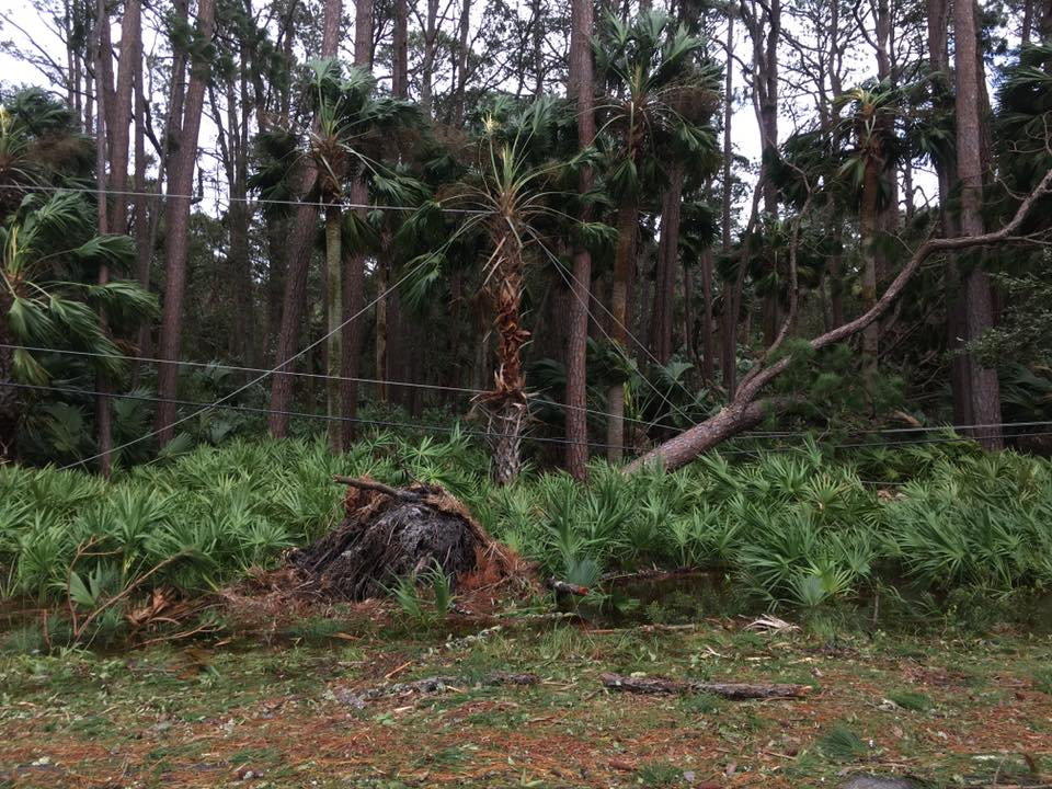 It's been impossible to get into the park, but this photo of damage near the park entrance is enough to show what's going on inside of the park as well. Photo by Kim Sullivan