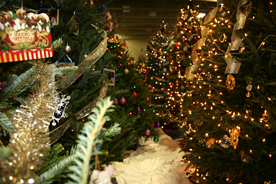 The annual Festival of Trees illuminates downtown with fun December 1st through the 3rd. ESPB photo