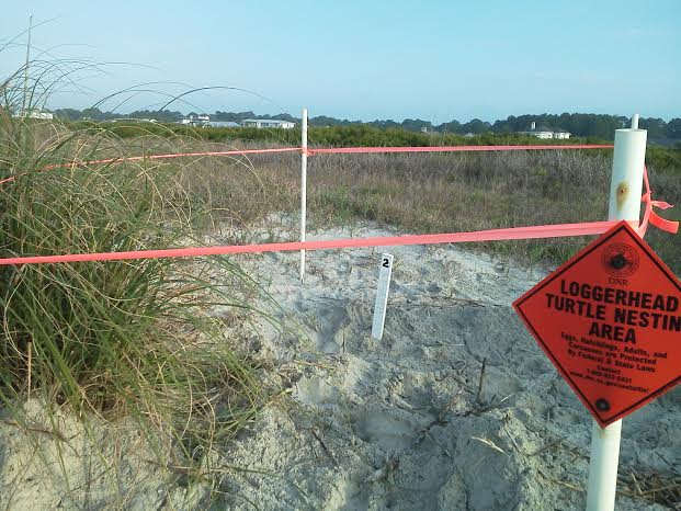 A loggerhead turtle nest is marked at Fripp Island.