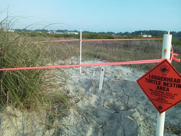 A loggerhead turtle nest is marked at Fripp Island.