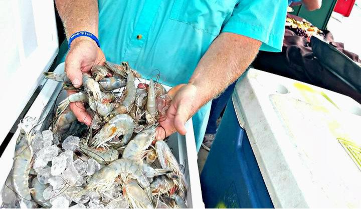 Craig Reaves of Sea Eagle Market shows off some beautiful local shrimp caught last week.  ESPB photo