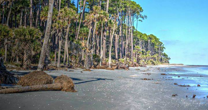 Image Result For Hunting Island State Park Beach Restoration
