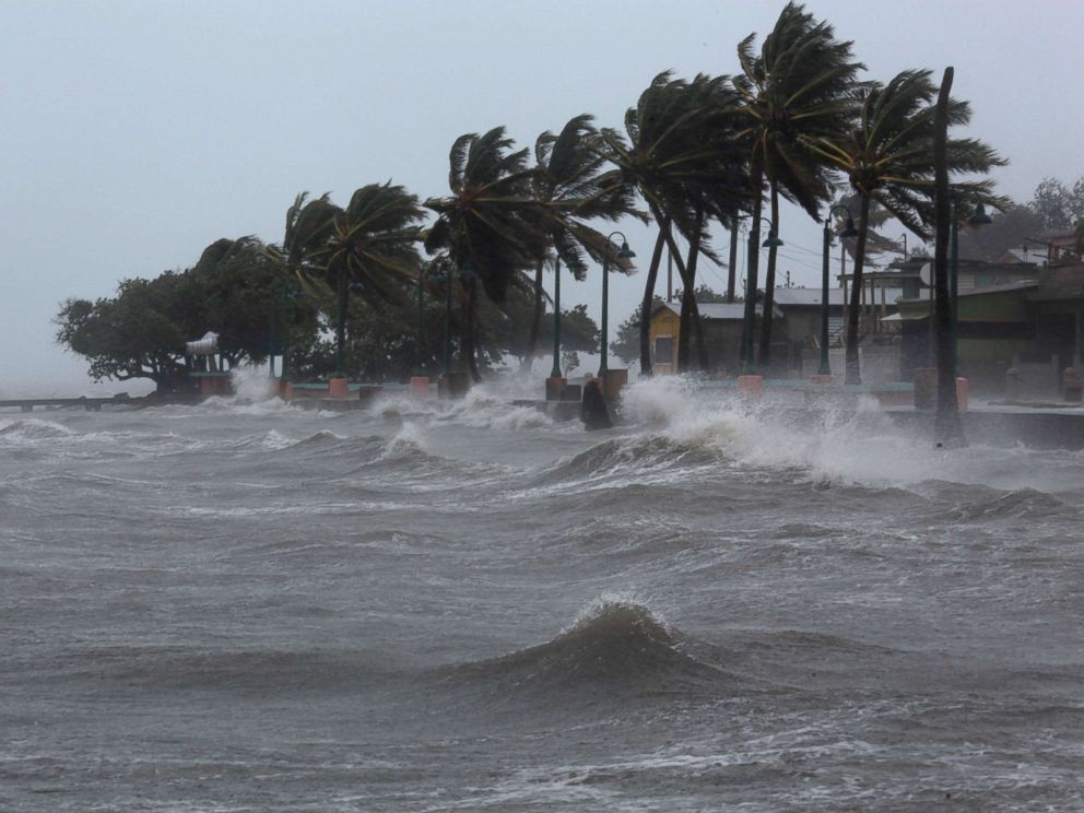 Palm trees buckle under winds and rain as Hurricane Irma slammed across islands in the northern Caribbean. Photo ABC News