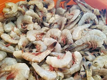 Beaufort Shrimp