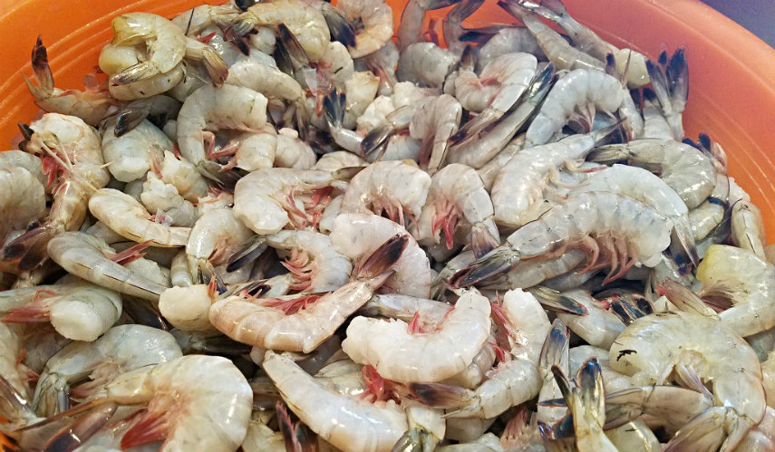 Lowcountry Food: Getting to know our local shrimp