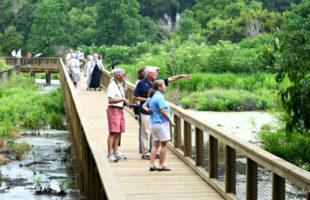 cypress wetlands port royal