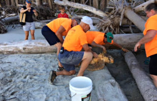 turtle rescued hunting island